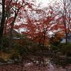 紅葉散る池