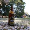 岡山地ビールと桜