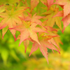 Autumn is coming soon・・・