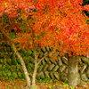暮れる秋2