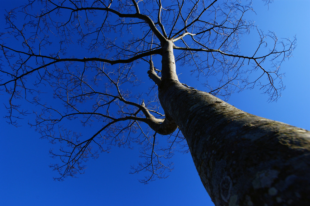 気になる木
