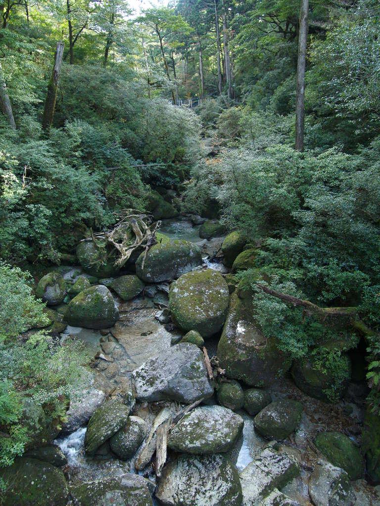 もののけ姫の森