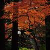 12月の紅葉