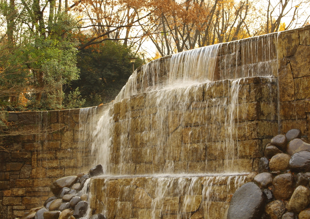 新宿中央公園その1 081213