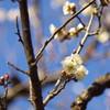 小石川後楽園090117 VI