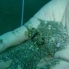 イボガザミ(幼魚)