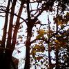 屋上の上の森にて