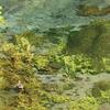 pellucid river