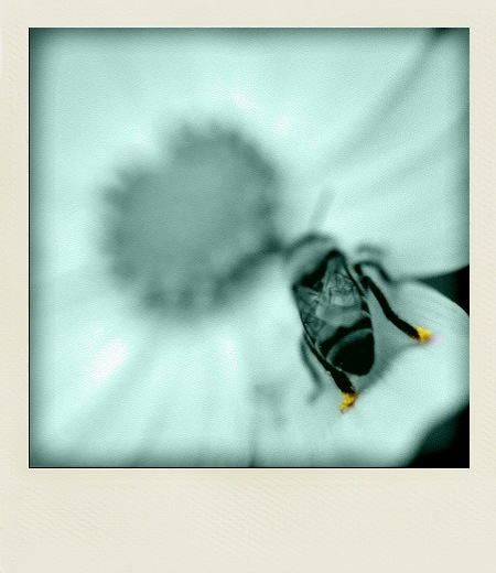 yellow foot