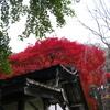観音堂と紅葉