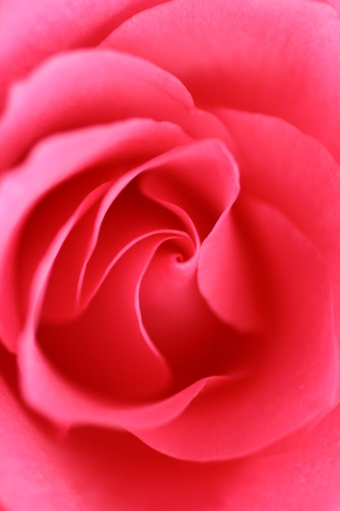 バラの神秘