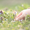 春を摘む Part.3