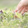 春を摘む Part.2