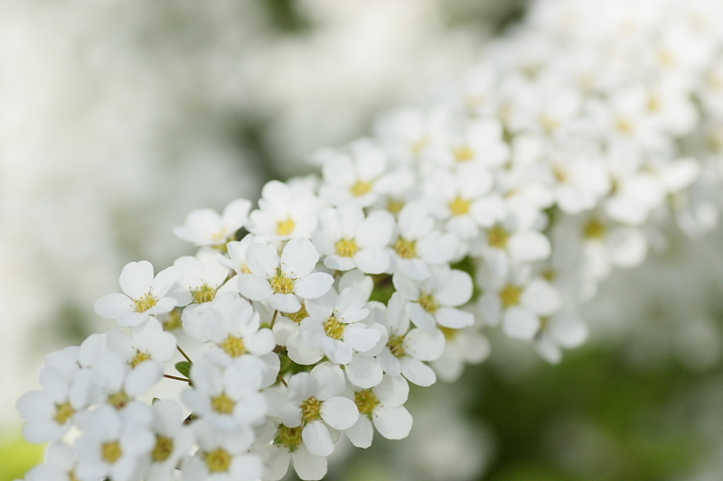 Road of Flower