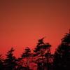 夕焼けと針葉樹