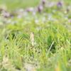 春を摘む Part.1