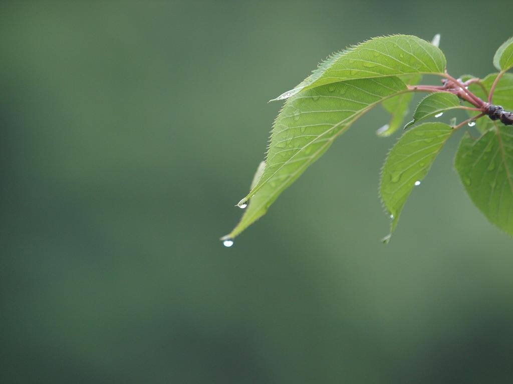 緑のチカラ