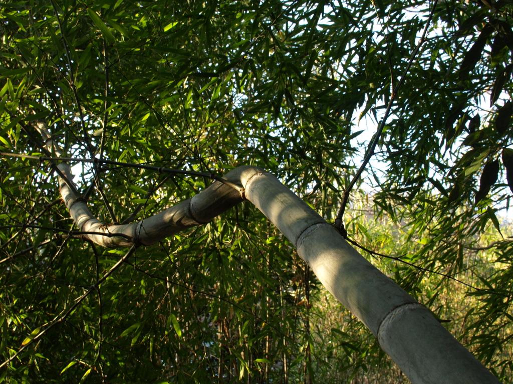 曲がった竹