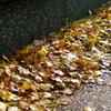 秋も終わり・・・