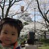 長浜城 豊公園の桜でちゅ(9か月)