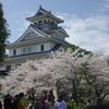 長浜城 豊公園の桜