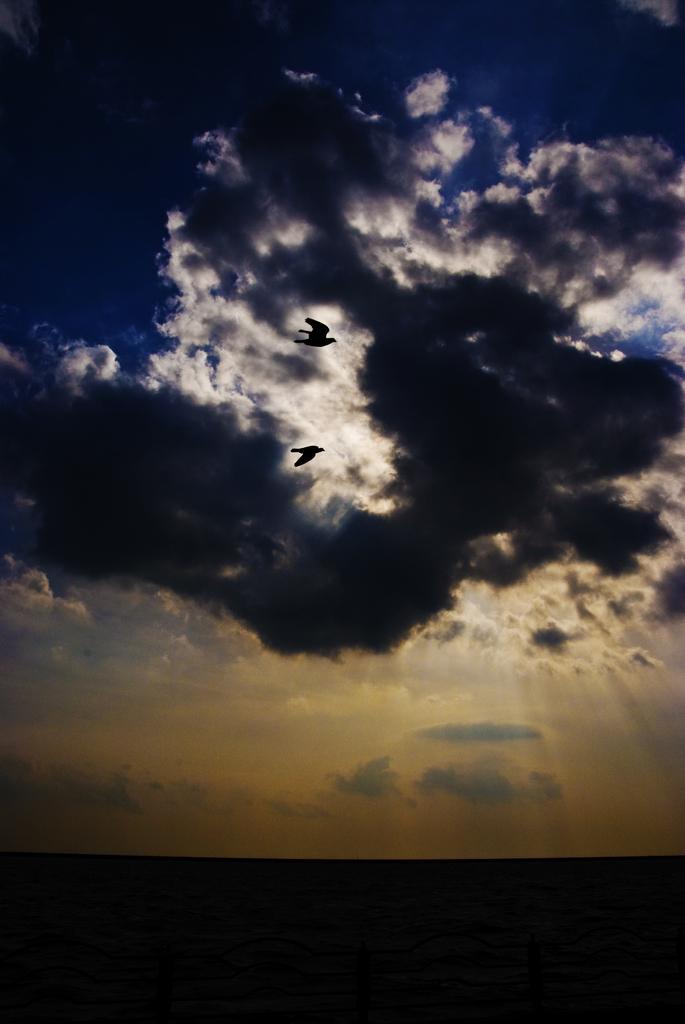 fly 2009 001