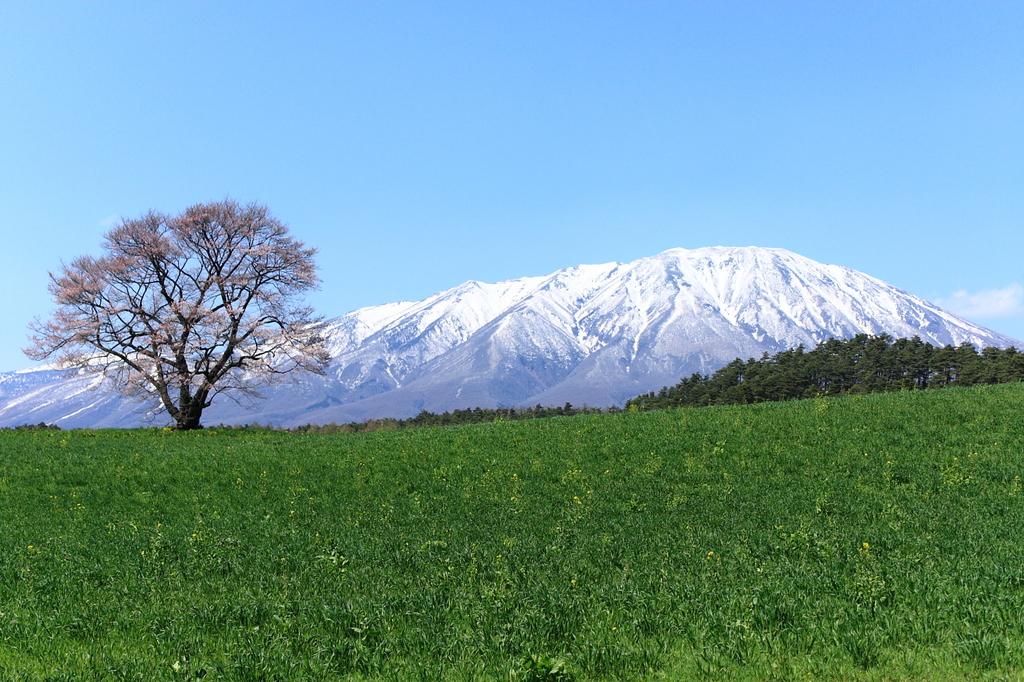 小岩井 一本桜と岩手山