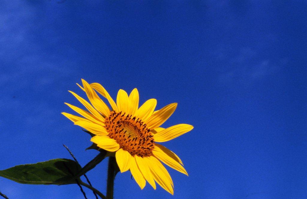 青き空 遠い夏の日