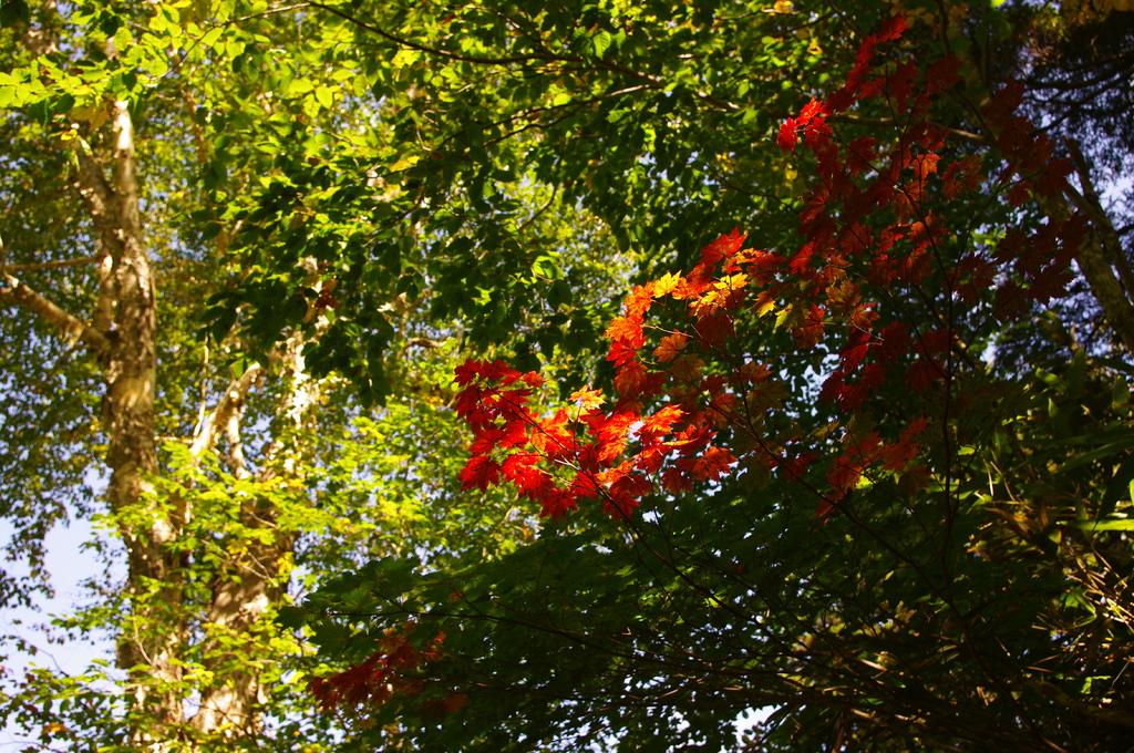 秋もすぐそこ!
