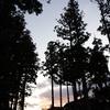 杉と夕焼け