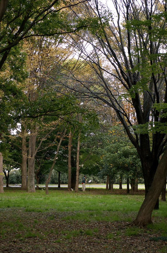 秋の日の独奏会