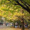 秋の指定席