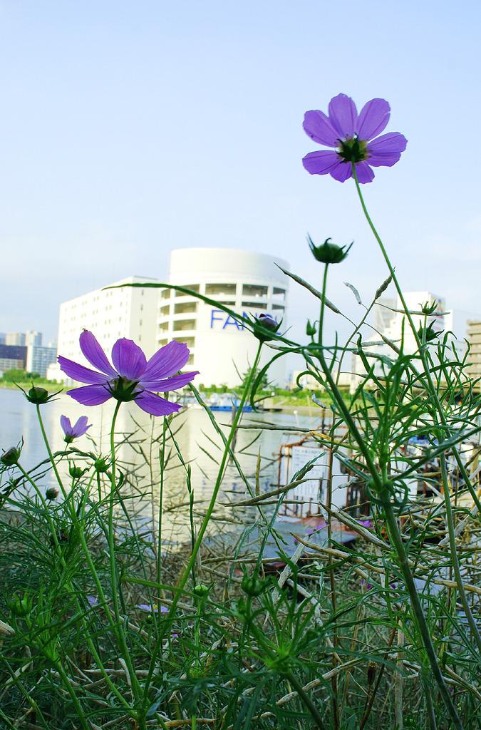 花の向こう岸