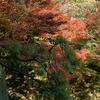 紅葉と松緑