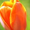 春の光に包まれて