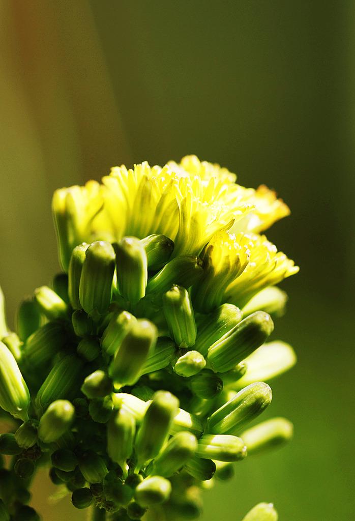 小さな黄色い花