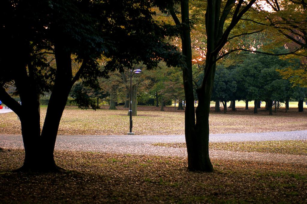 落日の公園