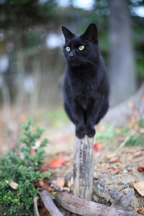 黒猫の曲芸