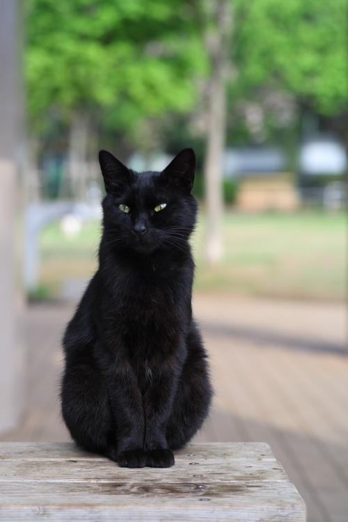 黒猫の肖像
