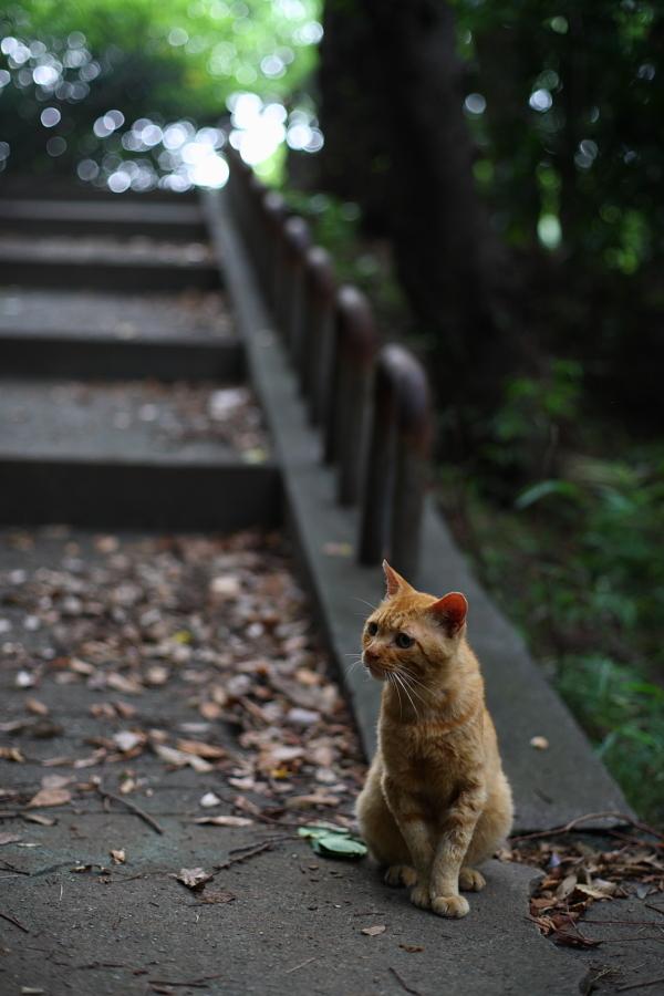階段の前でおすまし