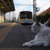 電車と白猫