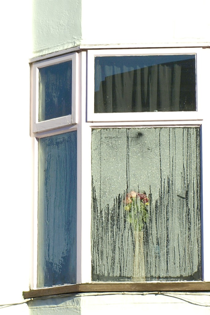 flower by the window