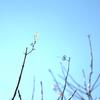 枝の先の小さな花