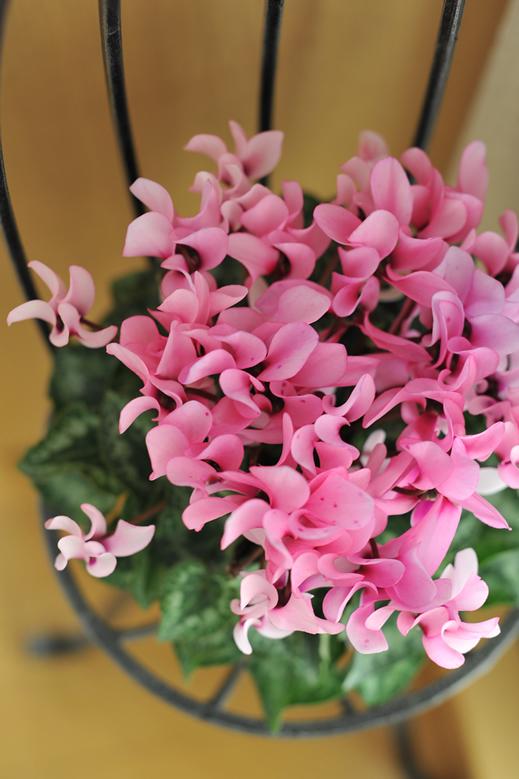 花びら、踊る