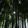 竹林の向こう