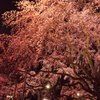 桜_T_IMG_4906_5D