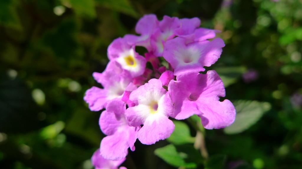 裏庭の花たち