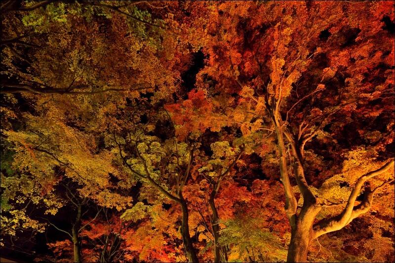 紅葉@夜の大平山