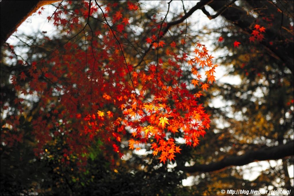 外苑の紅葉