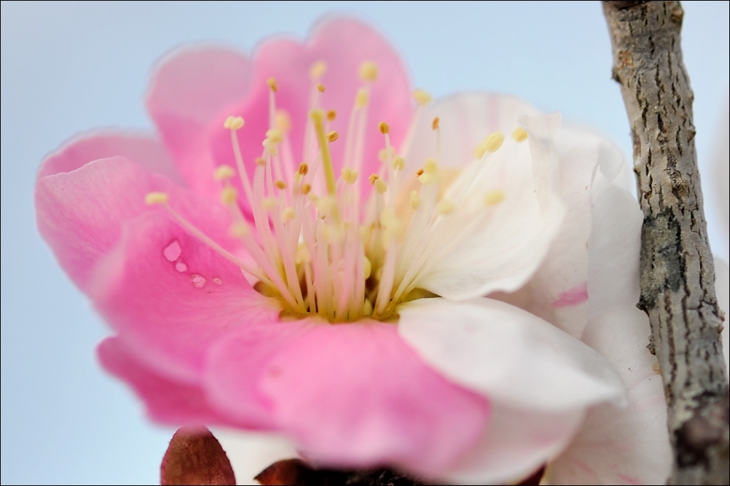 pink and white,